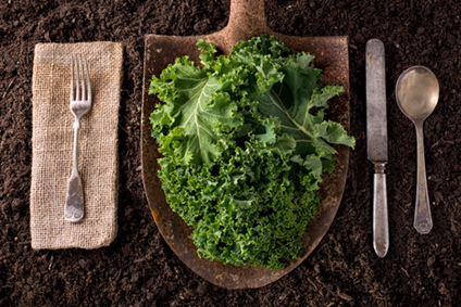 The Reasons of Eating Kale: A Leafy Green Vegetable
